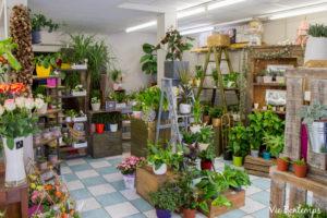 magasin fleuriste au havre sandrine de l'atelier zazi fleurs