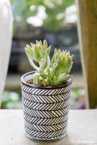 plante grasse en pot de la boutique de sandrine fleuriste au havre