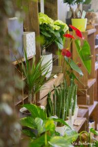 plantes grasses du magasin de sandrine fleuriste au havre