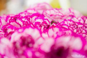 photo de détail fleurs à la coupe chez atelier zazi fleurs au havre en normandie