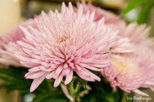 fleur coupée du magasin zazi fleurs au havre en Normandie